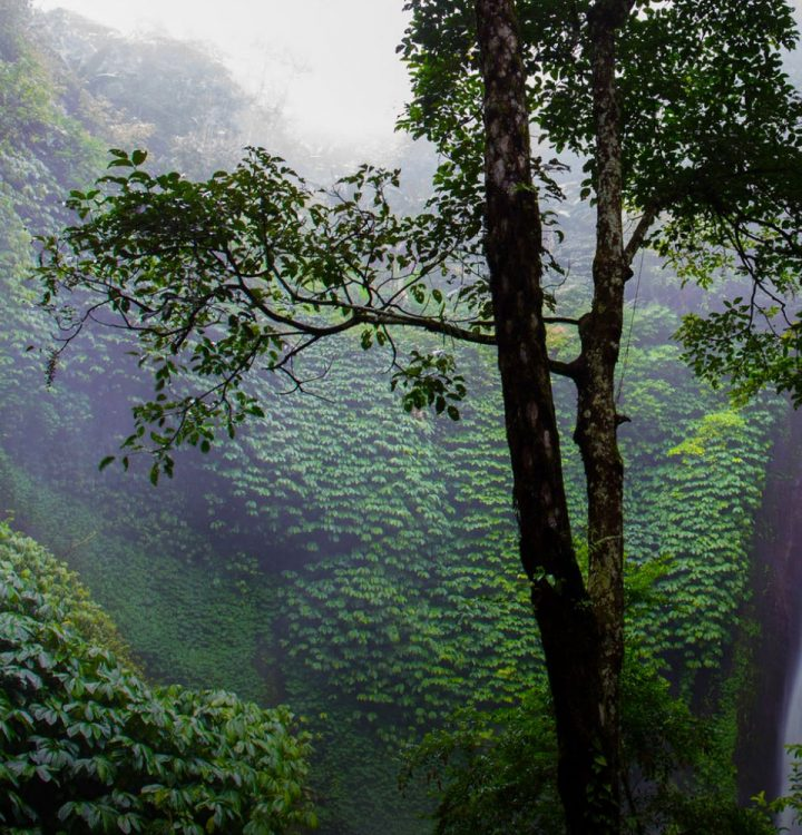 Rainforest image